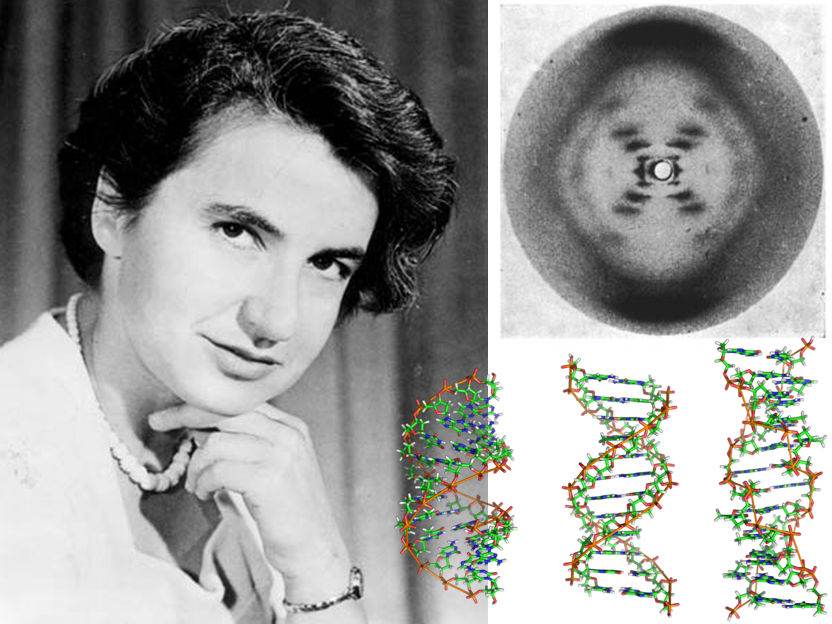 Rosalind Franklin La Científica Del Adn A Quien Quisieron