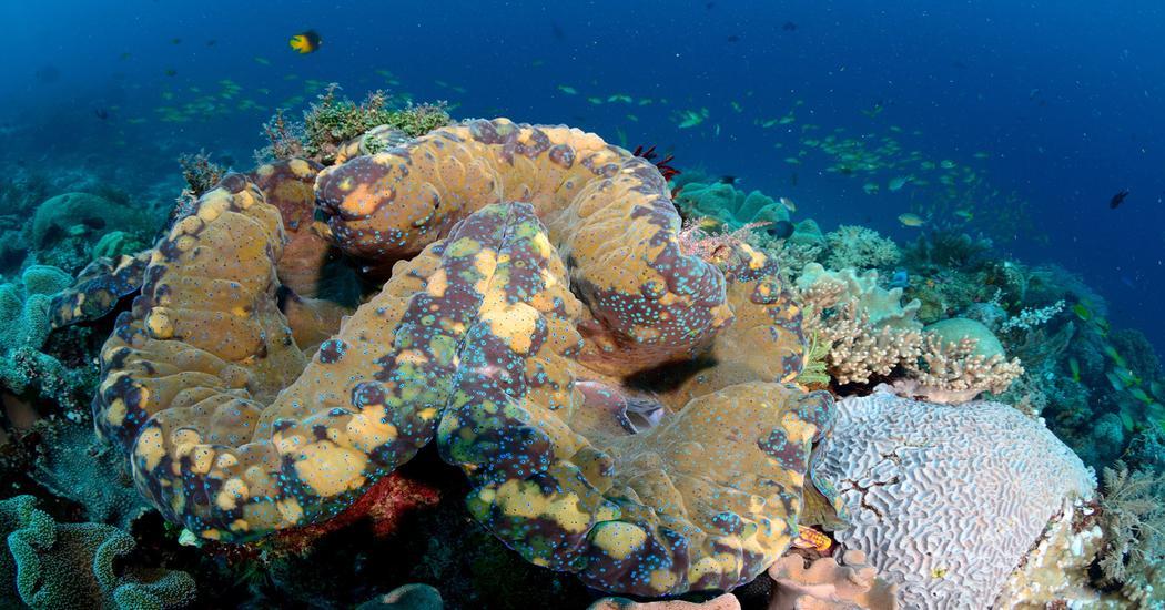 Archivo de Etiquetas: biología marina | Mujeres con ciencia
